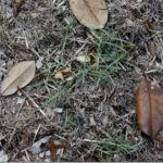 The Case of the Missing Lawn