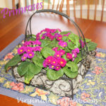 Pre-Spring Table Centerpiece with Primroses