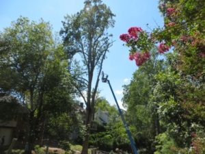 Tree Removal (Round #2) Aftermath