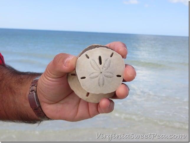 Florida - Sand Dollar2