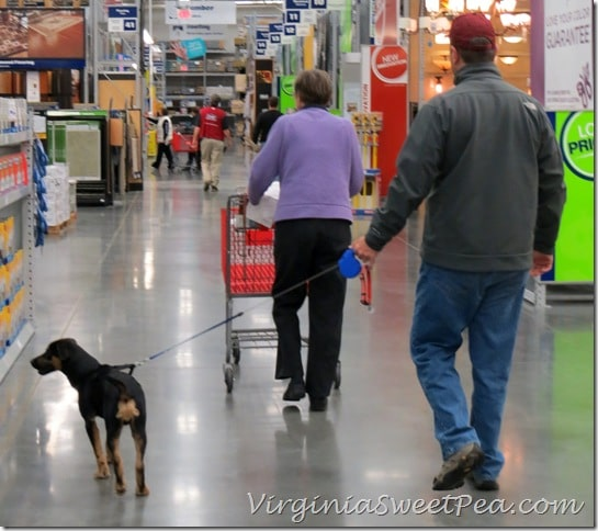 Sherman shopping at OBX Lowes