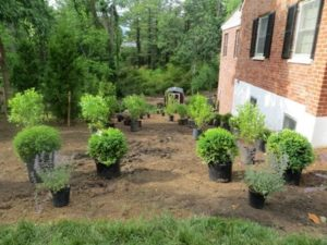 Giant Landscape Project :: Lots of Digging Ahead!