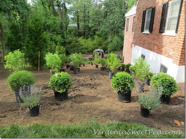 PlantingWeekend2