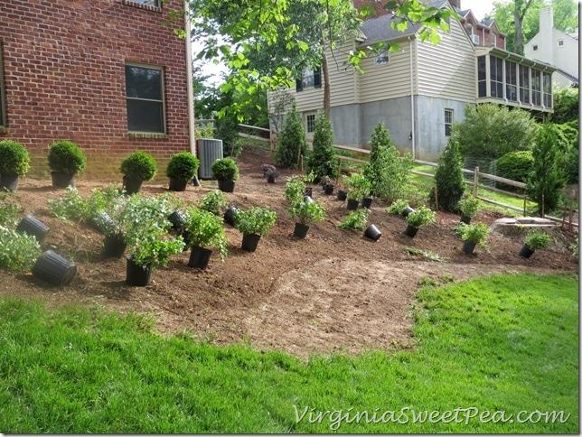 PlantingWeekend5