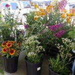 Visiting the Roanoke Farmers Market