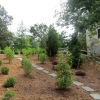 Side Yard Landscape Reveal
