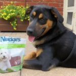 Safe Dog Fun for Summer and Made in the USA Dog Treats  #NudgesMoments