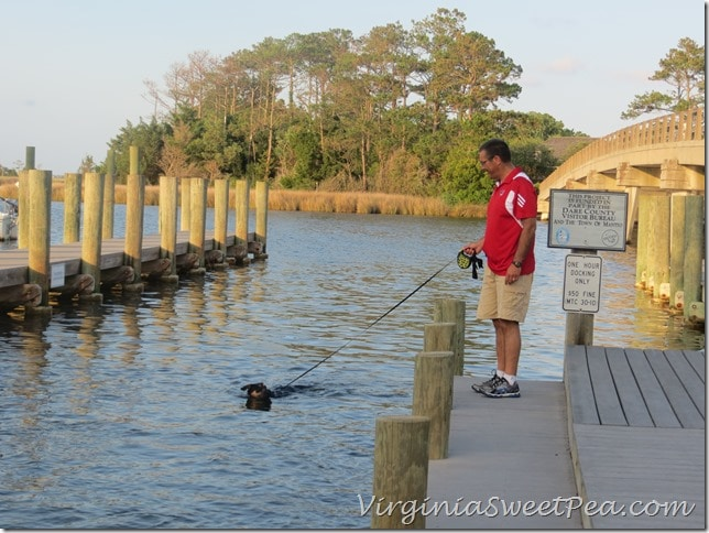 Sherman Swimming in Manteo