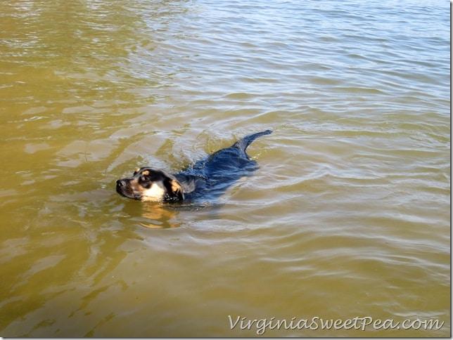 Sherman Swimming