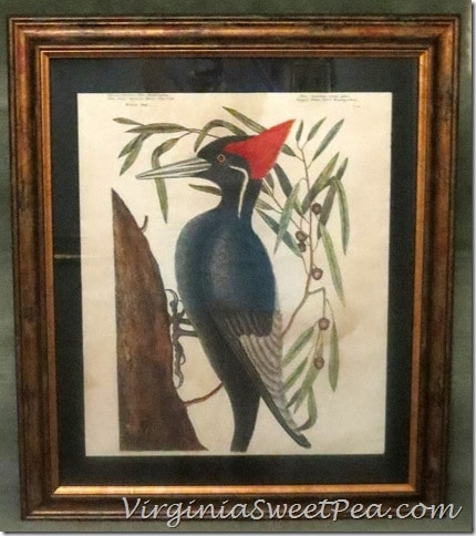 Woodpecker Picture Framed