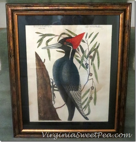 Woodpecker picked Picture