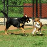 Sherman Visits the Lynchburg Dog Park