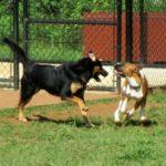Sherman Visits the Lynchburg Dog Park