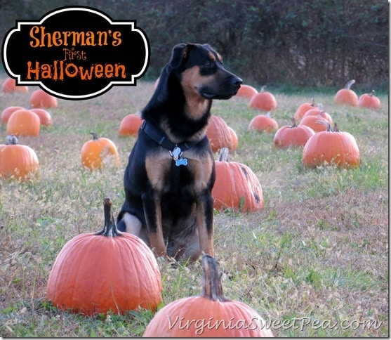 Sherman Skulina's First Halloween