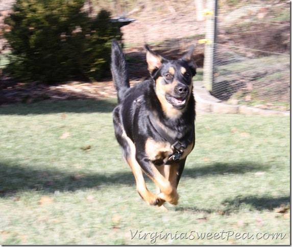 Sherman Skulina Running