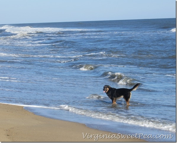 Sherman Skulina loves the OBX