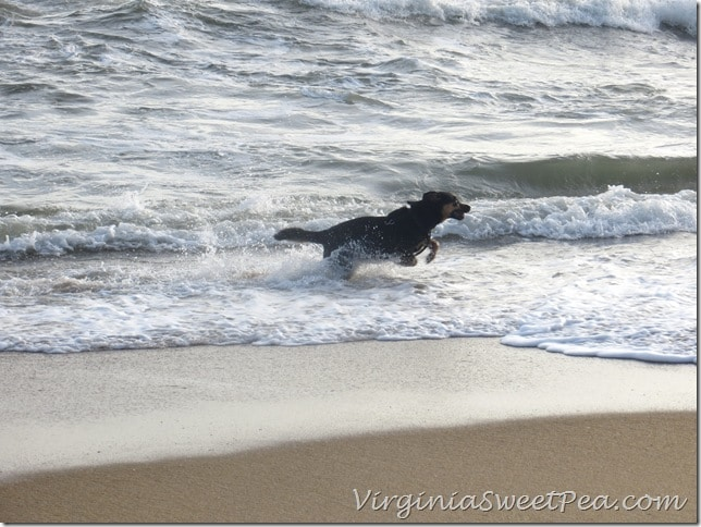 Sherman Skulina loves the waves at OBX
