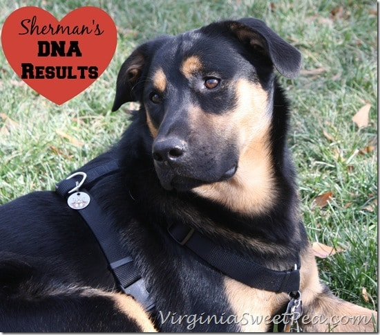 Sherman Skulina's DNA Results