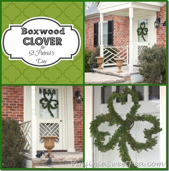 Boxwood Clover for St. Patrick's Day by virginiasweetpea.com