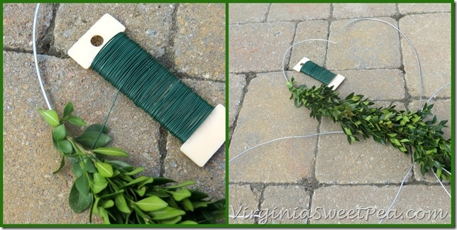 How to Make a Boxwood Clover for St. Patrick's Day