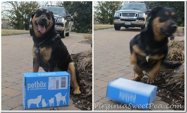 Sherman Receives his PetBox