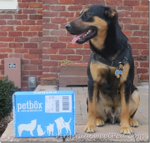 Sherman with his petbox
