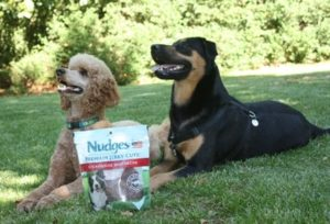 #ad Positive Reinforcement Dog Training with Nudges