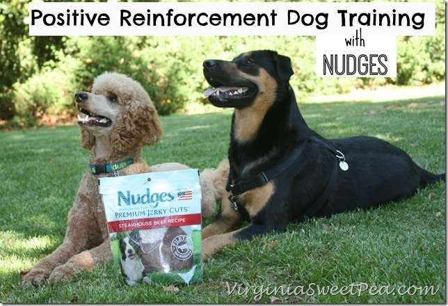 Positive Reinforcement Dog Training with Nudges by virginiasweetpea