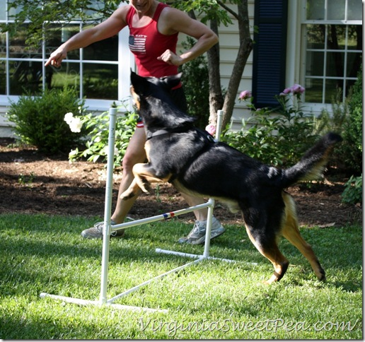 Sherman Skulina Jumps - Positive Reinforcement dog training