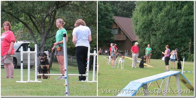 Sherman Skulina at Agility