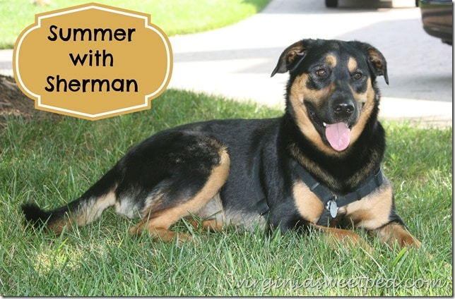 Summer with Sherman Skulina