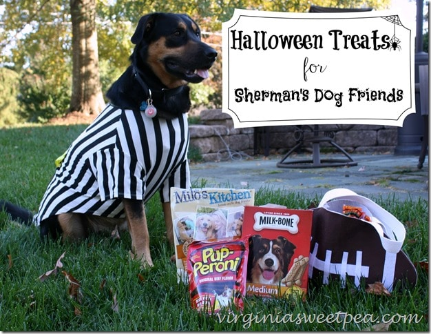Halloween Treats for Sherman's Dog Friends