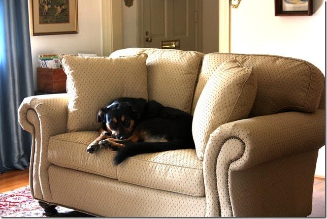 Sherman Skulina on the Fancy Sofa