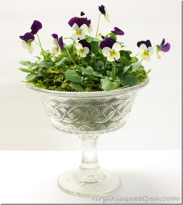 Easy Spring Centerpiece with Violas by virginiasweetpea.com