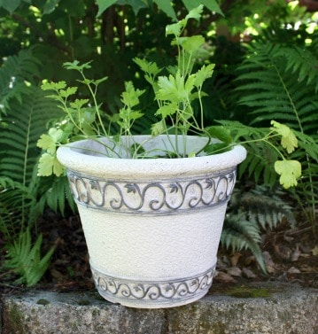 Worn flower pots get a makeover with paint. virginiasweetpea.com