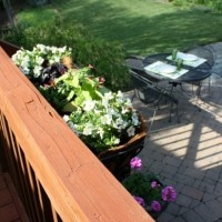 Container Gardening with Monrovia Plants by virginiasweetpea.com
