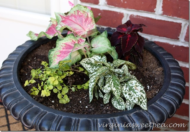 Monrovia plants planted in a gorgeous urn from Balsam Hill.
