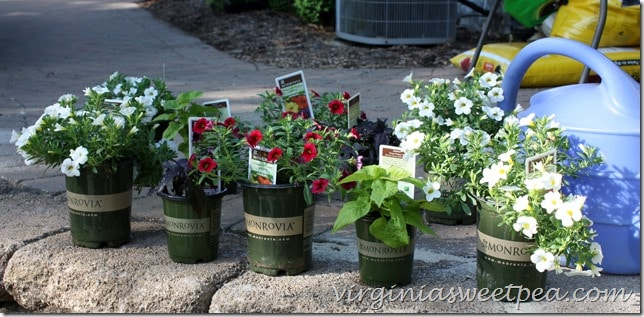 Monrovia plants purchased for deck planters