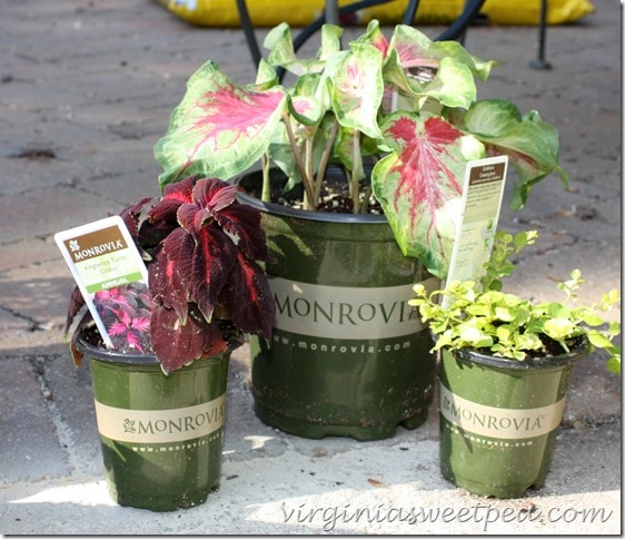 Monrovia-plants-for-urns-on-deck