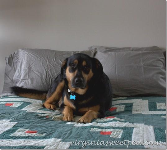 Sherman Skulina on the Bed at SML