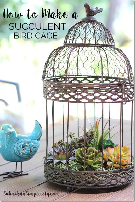 Decorate-with-Succulents-in-Birdcage