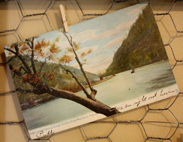 Antique Post Card Display Sweet Pea