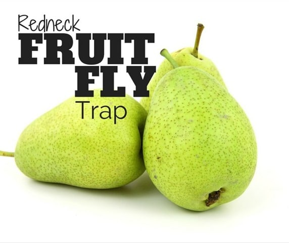 Fruit-Fly-Facebook-768x644