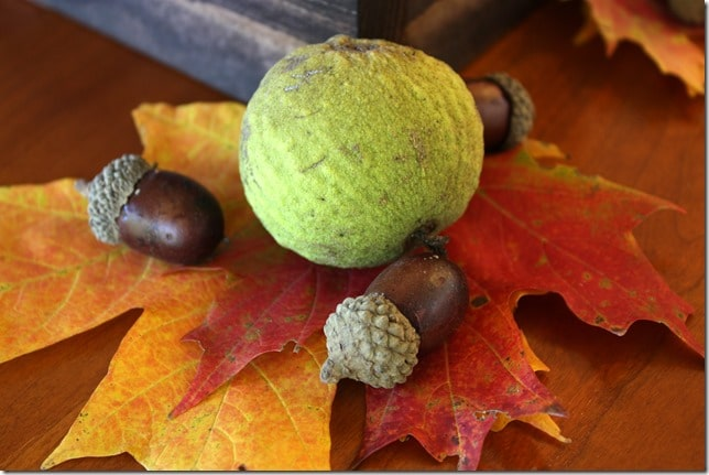 Fall folliage with walnuts and acorns.
