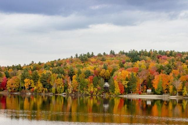 fall-foliage-17