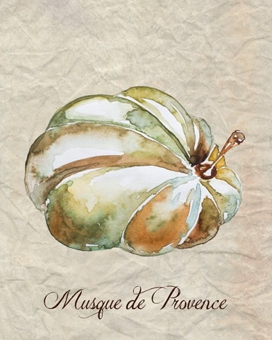 Musque_de_Provence_Watercolor_Pumpkin_1024x
