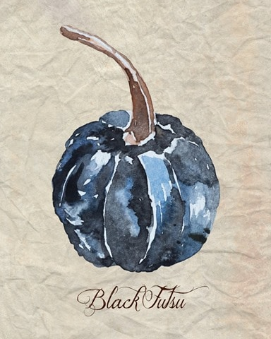 Watercolor_Black_Futsu_Pumpkin_1024x