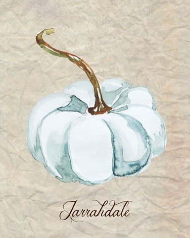Watercolor_Jarrahdale_Pumpkin_1024x