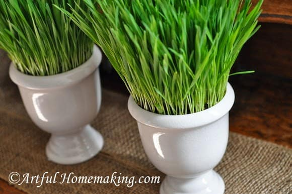 How to Grow Wheatgrass for Decoration - Best of the Weekend Feature for March 16, 2018