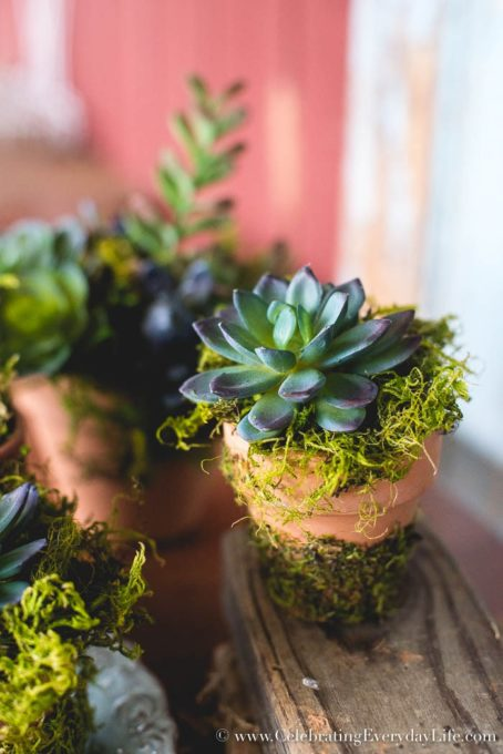 Simple Succulent Arrangements for Under $5 - Best of the Weekend Feature for April 27, 2018